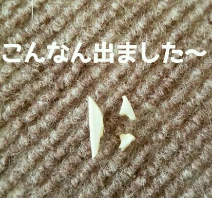 2017-03-08_11.14.14_crop_580x543-435x407.jpg