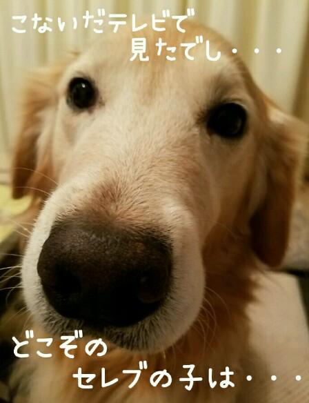 2017-09-14_07.58.34_crop_690x899-448x584.jpg